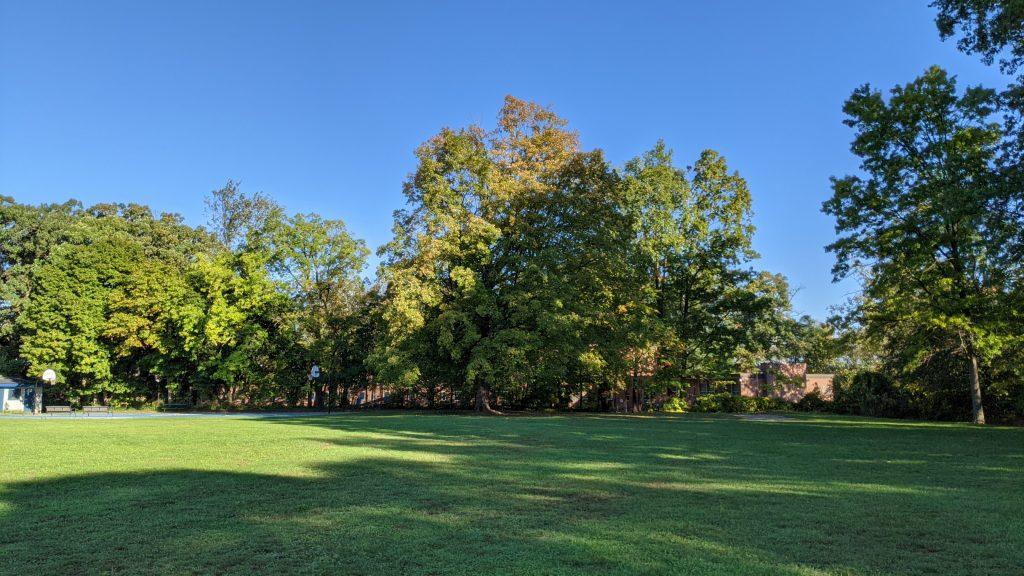 The Tai Chi Tree at Wilcox Park